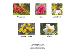 K - Blooms cards crocosmia group-2