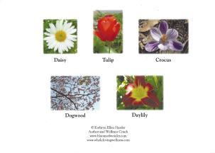 K - flower cards daisy group